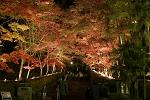赤坂山公園 紅葉