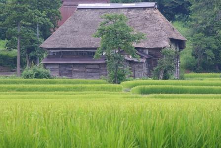 高柳の風景.JPG